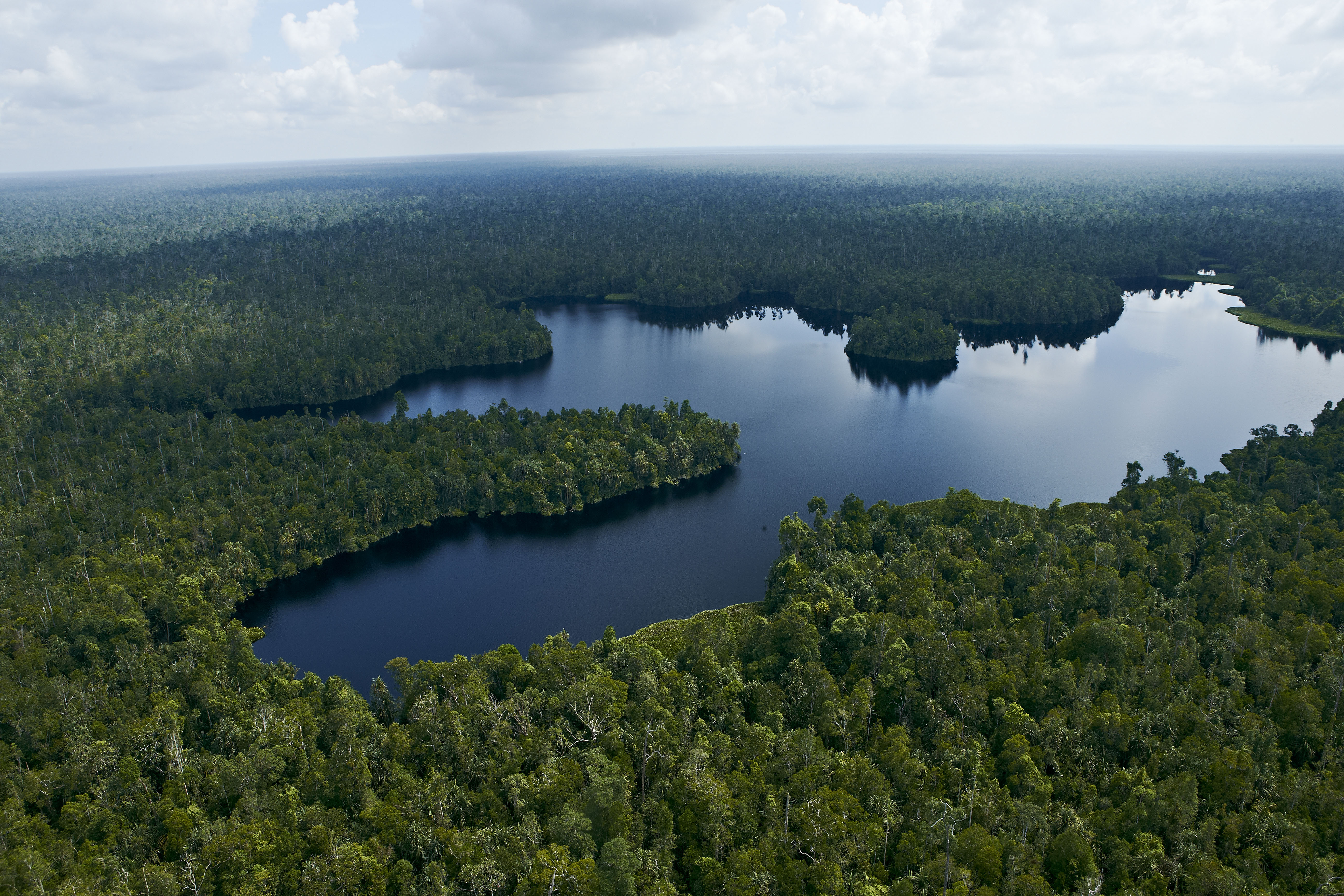 Restorasi Ekosistem Riau (RER) was launched in 2013 to protect ecologically important pat forest in Kampar Peninsula, Riau, Indonesia.
