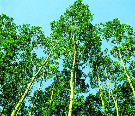 The Stakeholder Advisory Committee oversees implementation of APRIL's Sustainable Forest Management Policy.