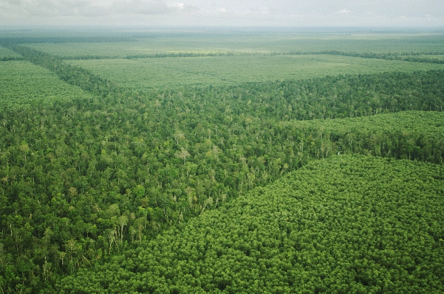 APRIL to colaborate on forest High Carbon Stock standard