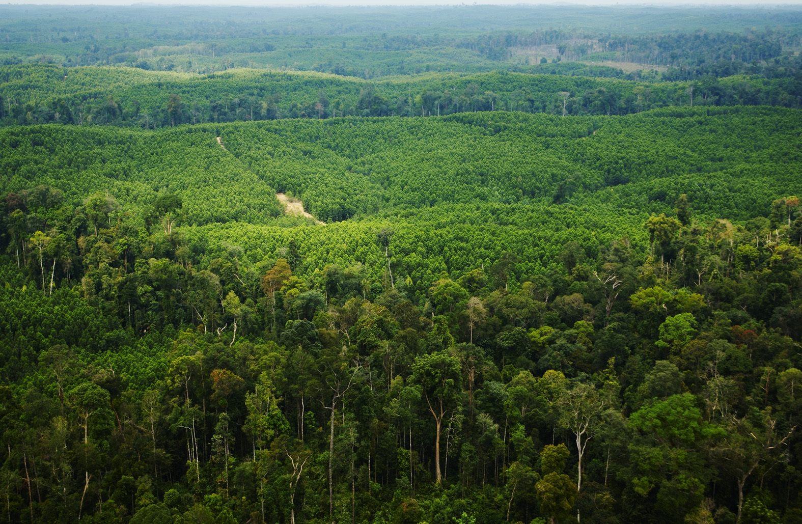 Sustainably managed forest plantation