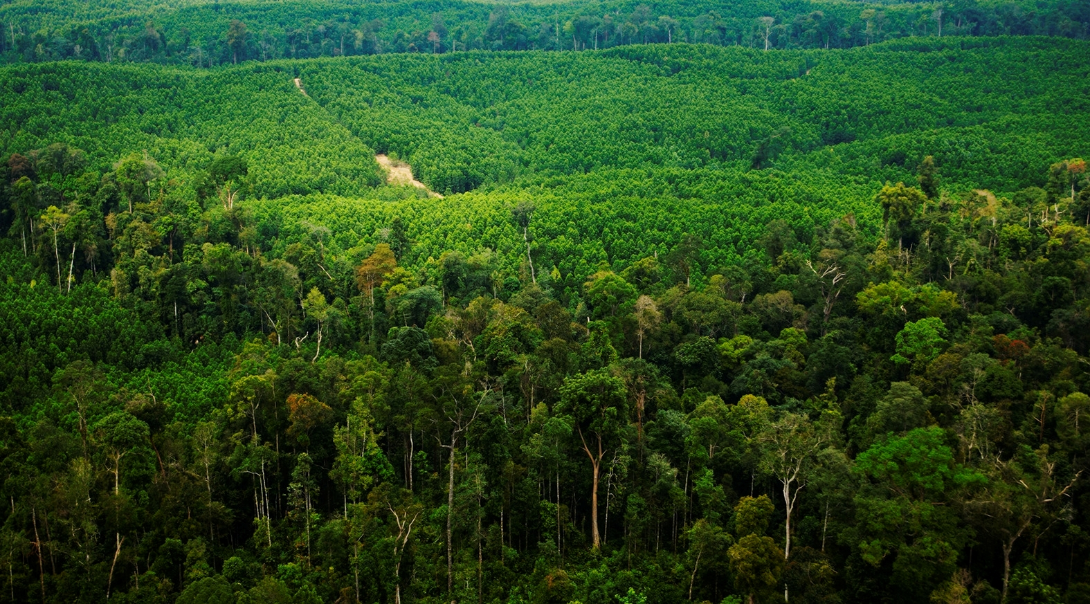 APRIL's Sustainably Managed Forest Plantation